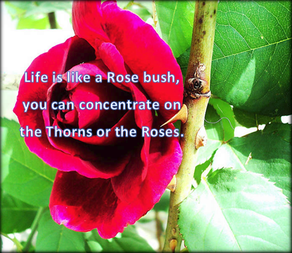 Roses and Thorns..png